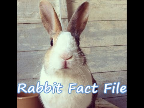 How To Look After A Pet Rabbit | 12 Rabbit Care Tips