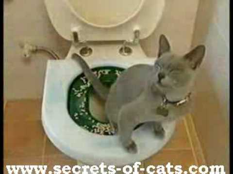 Litter Kwitter – The Original Cat Toilet Training System