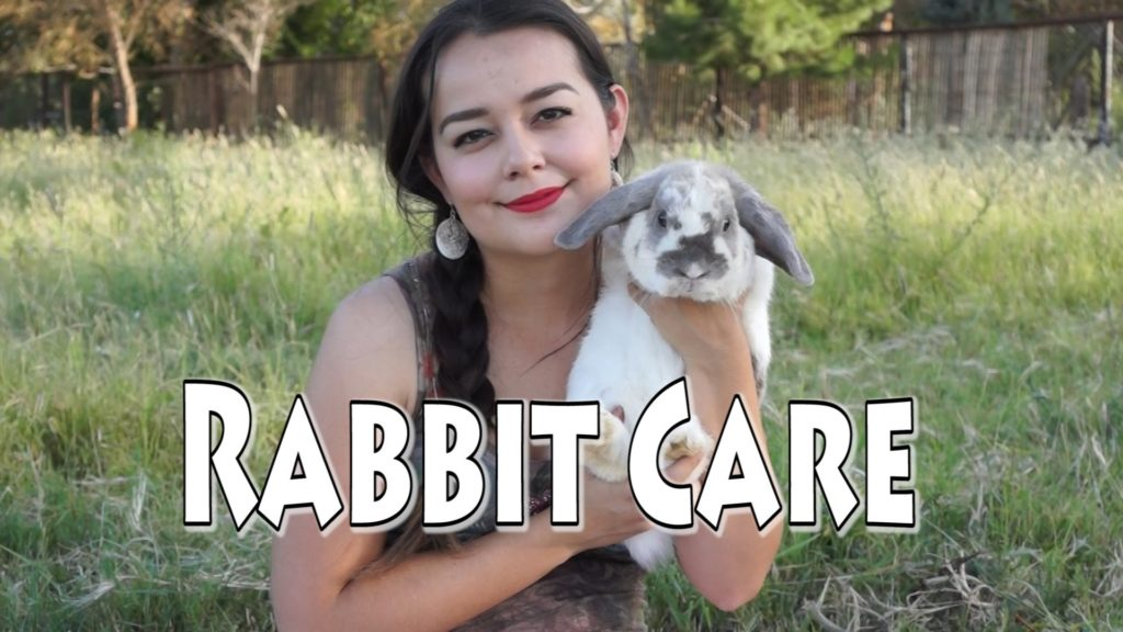 Rabbit Care – Requested