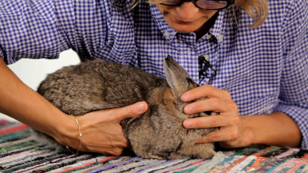 How to Handle a Pet Rabbit | Pet Rabbits