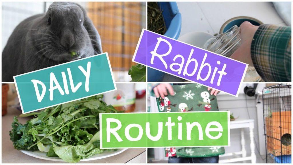 Daily Rabbit Routine – StormyRabbits
