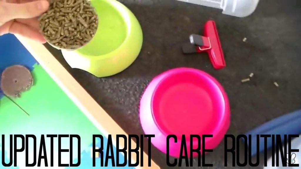 Rabbit Care Routine 2016