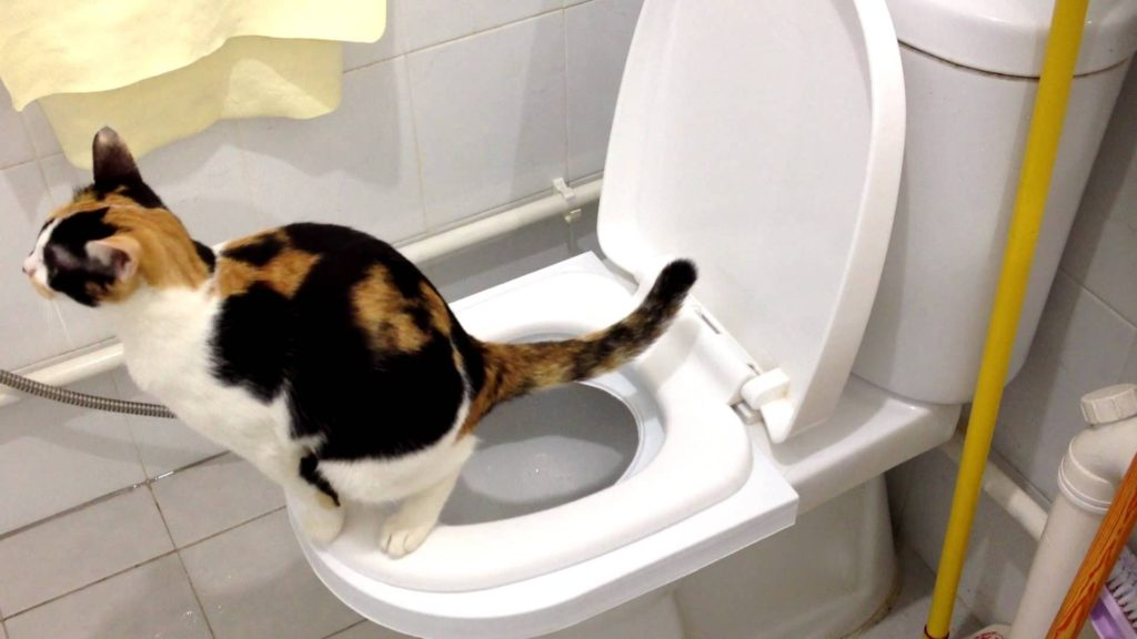 [Step by Step] Cat Toilet Training