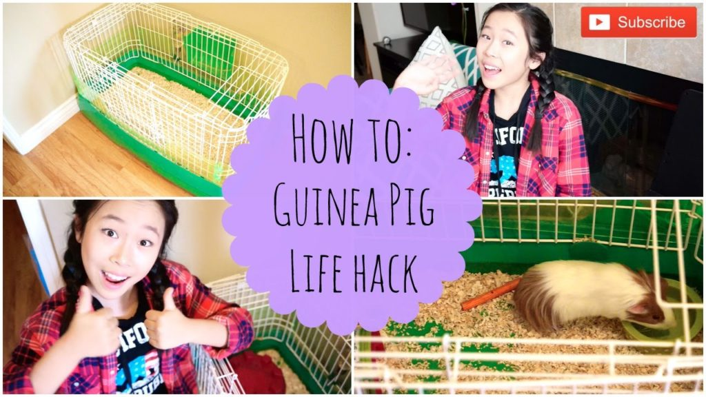 How to Take Care of Your Guinea Pig/Life Hacks – Michele Lu