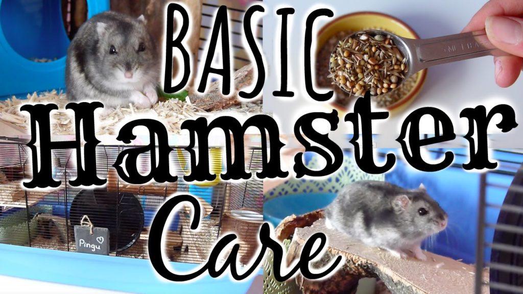 Basic Hamster Care