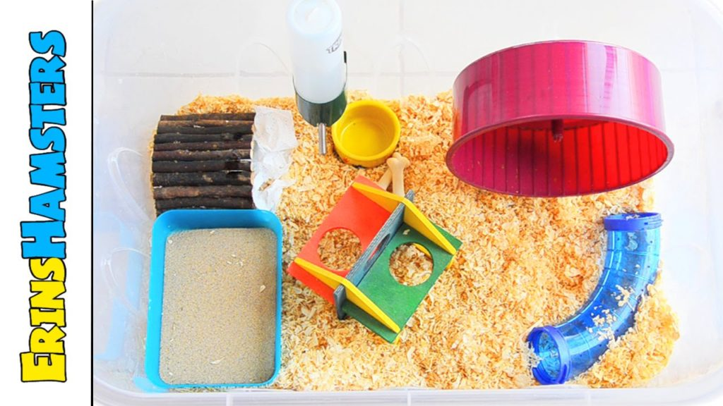 How To Set Up A Very Basic Hamster Cage