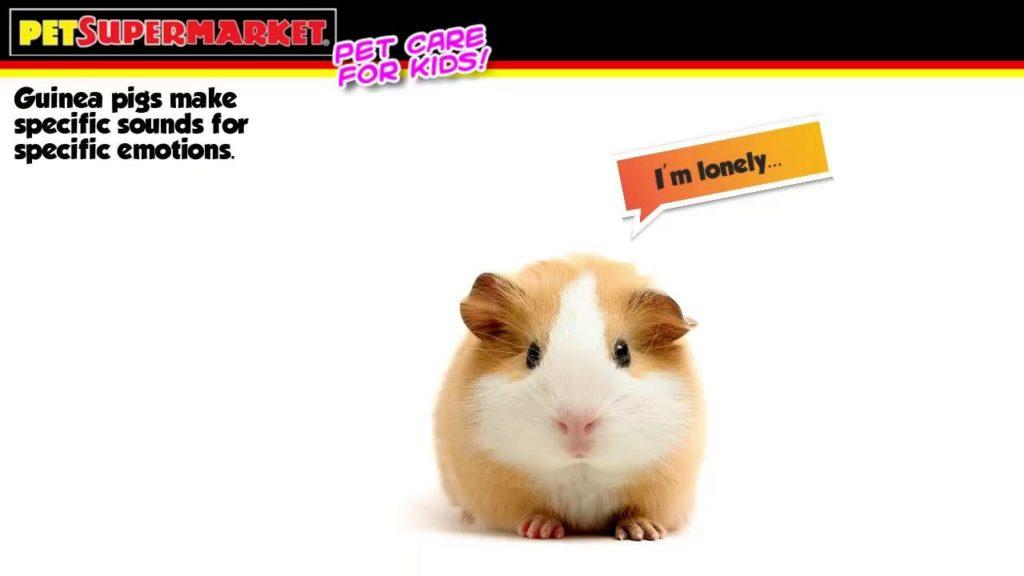 Guinea Pig Care Training for Kids