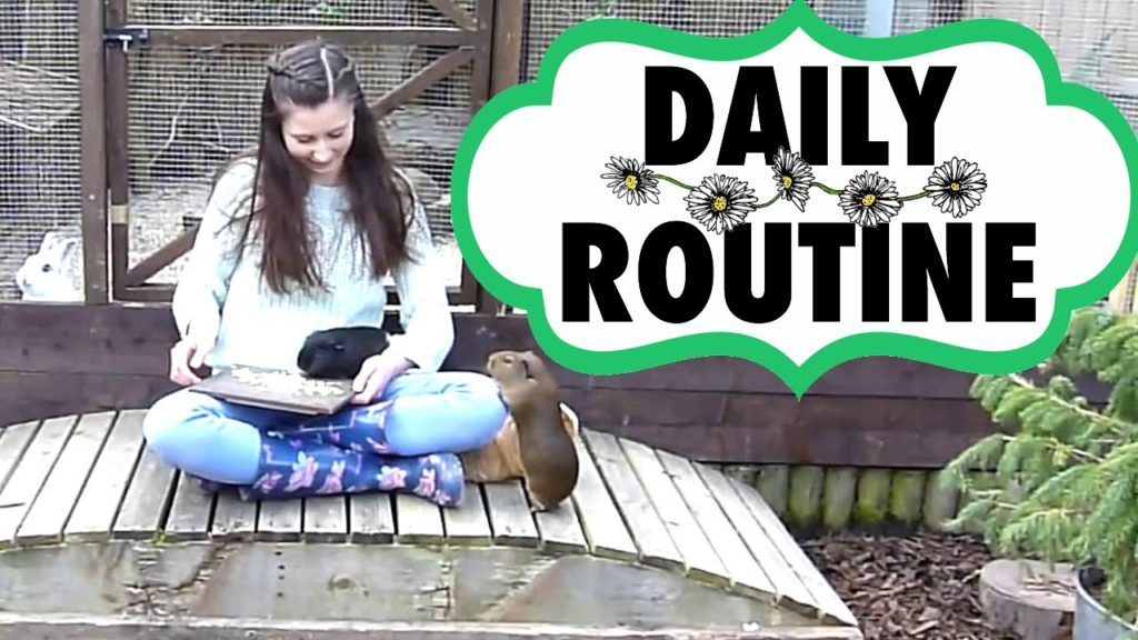 Daily Guinea Pig Routine | Spring 2016