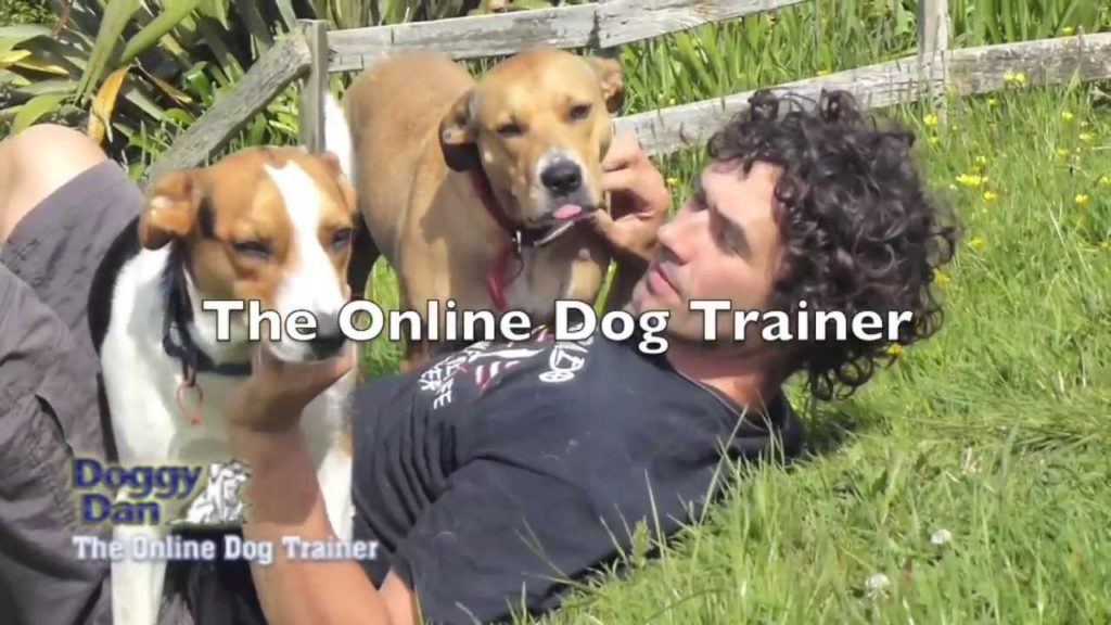 How to raise the perfect Dog – The Online Dog Trainer