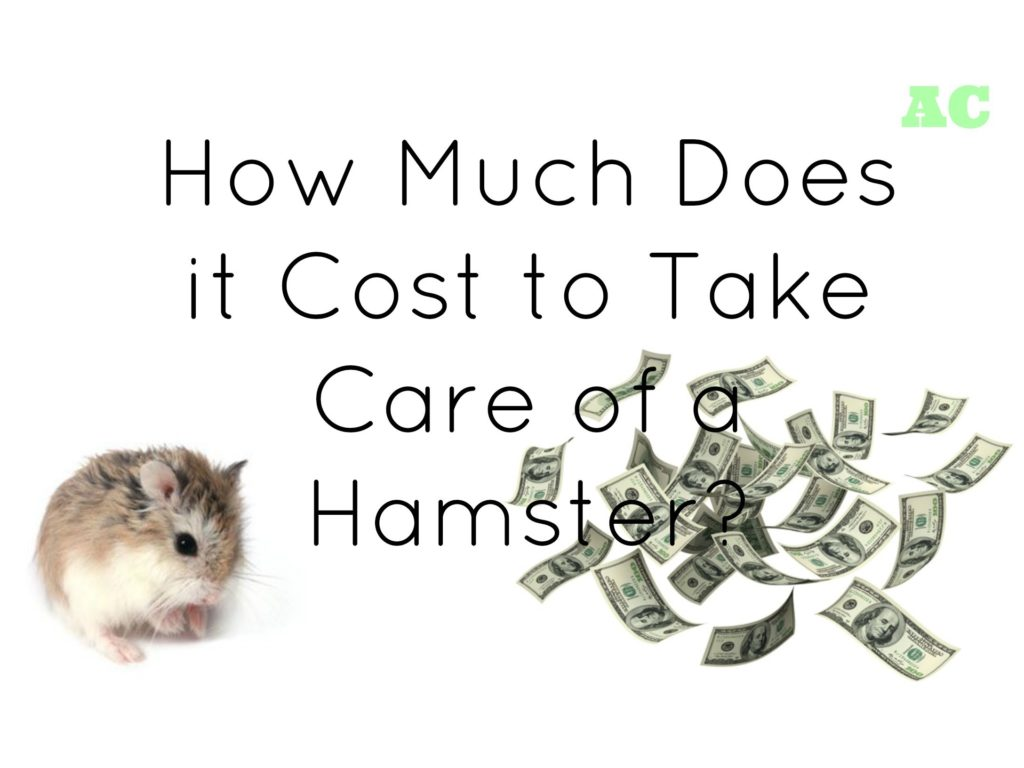 How $Much Does it Cost to Take Care of a Hamster