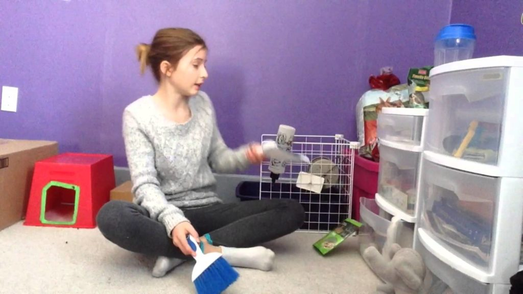 How to litter train your rabbit | Rabbit Care | Holland Lop | House Rabbit | Bunny Hercules | Video