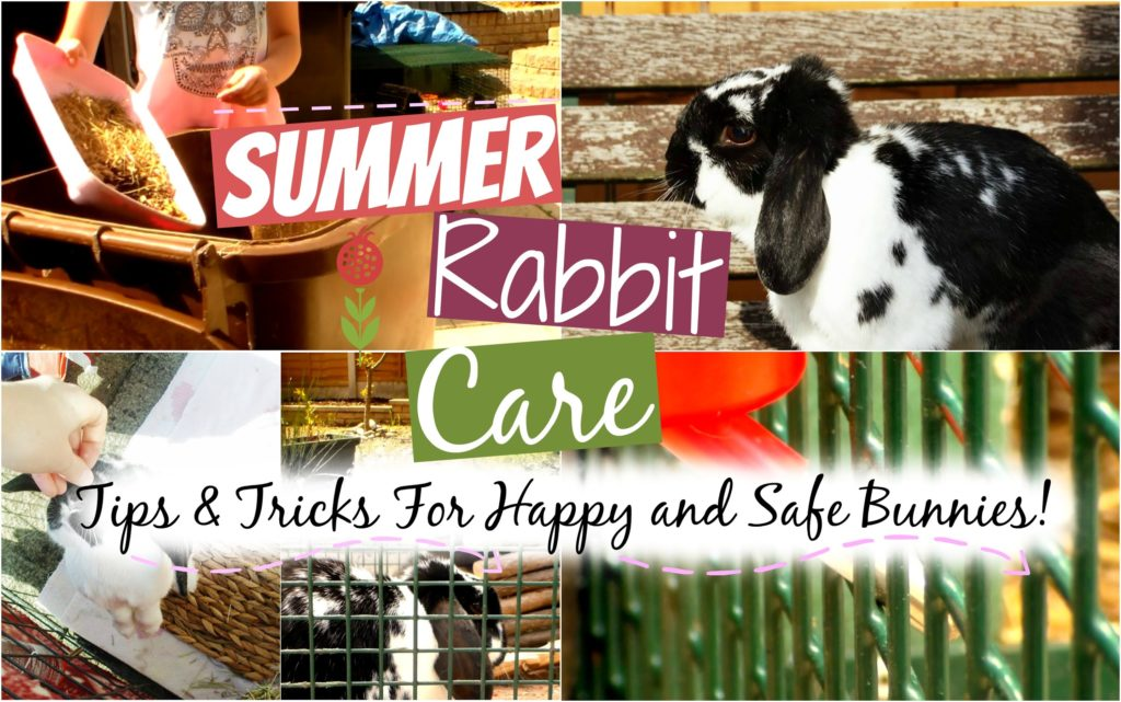 Summer Rabbit Care: Tips & Tricks | RosieBunneh
