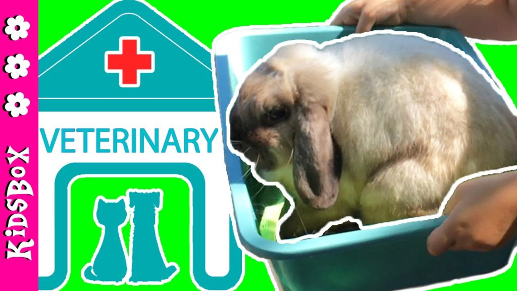 REAL VET VISIT ✚  Check-up and Vaccination ✚ Pet Rabbit Care