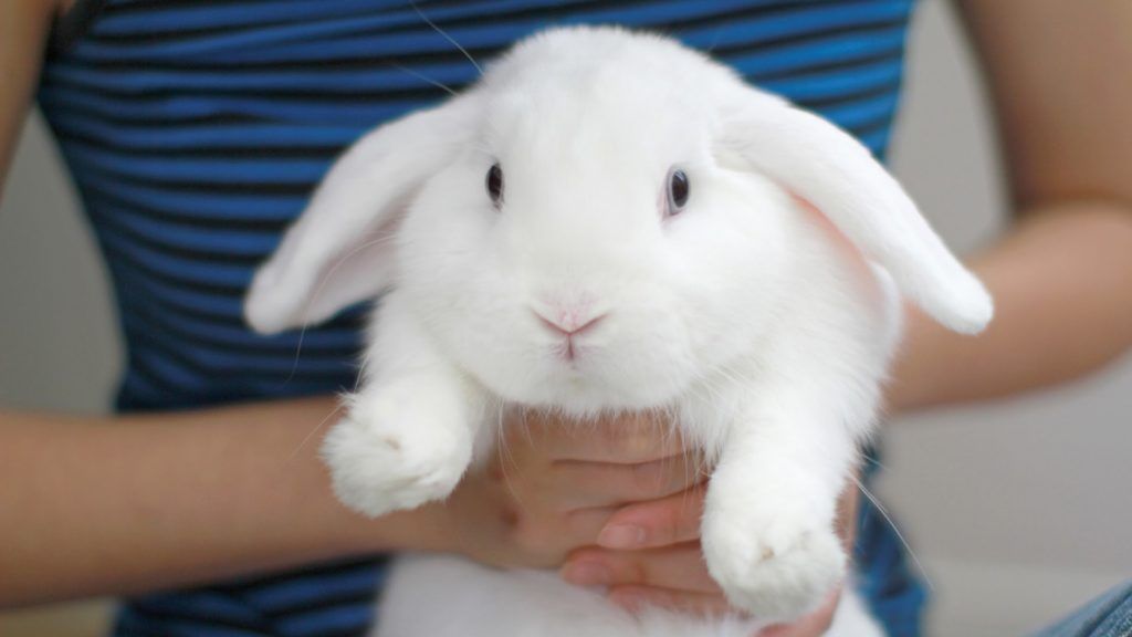 3 Rabbit Care Tips from Booboo the Bunny!