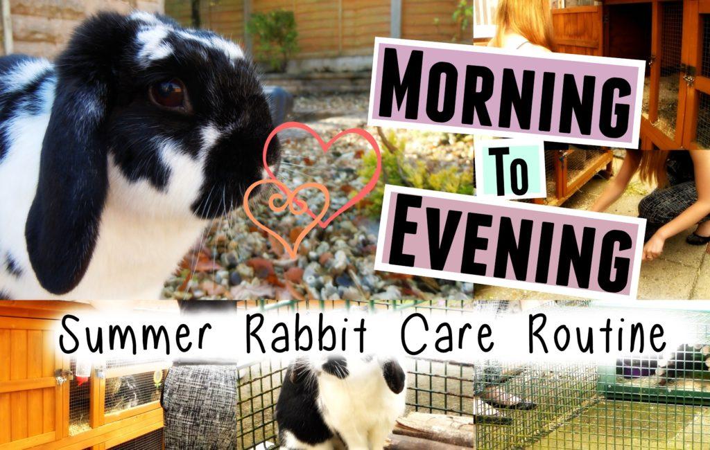 SUMMER RABBIT CARE ROUTINE: Morning To Evening | RosieBunneh