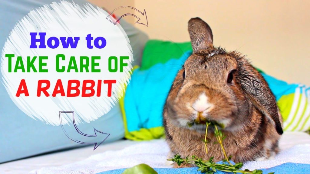 How to take Care of a Rabbit