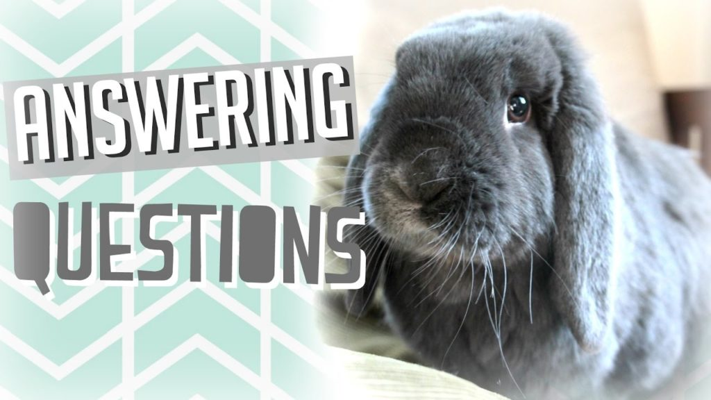 Rabbit Care Q&A! Answering Your Questions