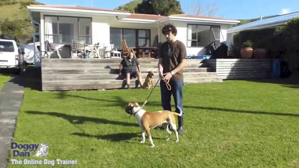 Introducing a pitbull to other dogs