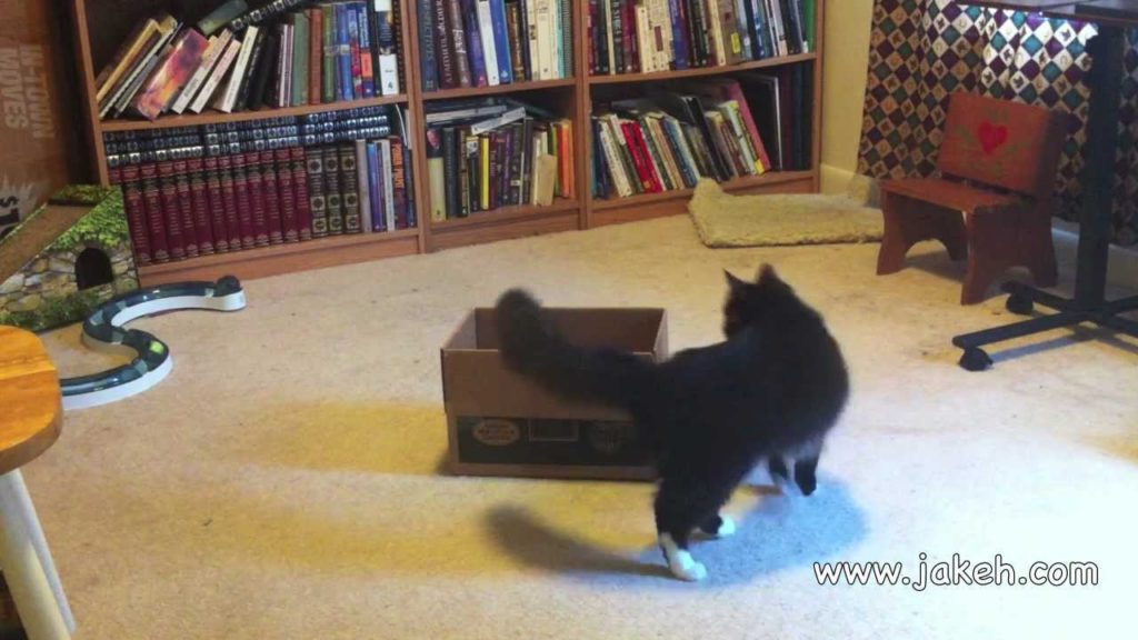 Clicker Trained Cat: 30 Amazing Cat Tricks