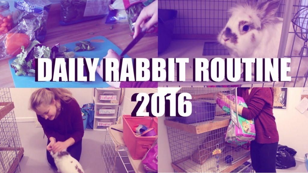 Daily Rabbit Routine 2016