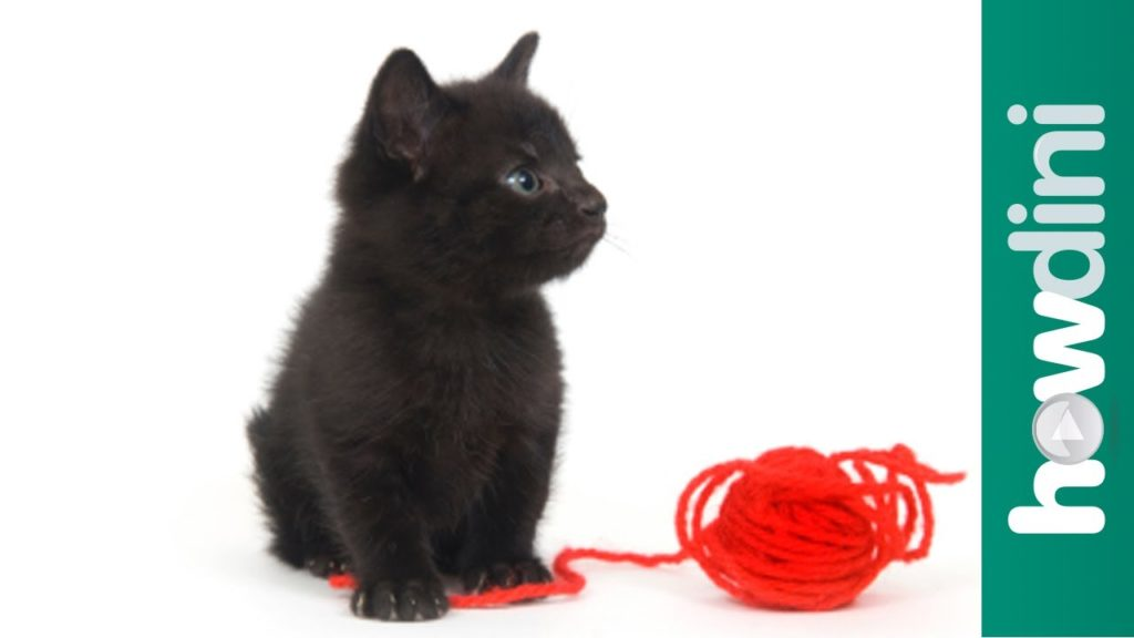 How to train a kitten to play gently – Cat training tips