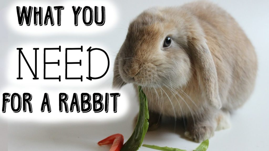 What you NEED for a rabbit