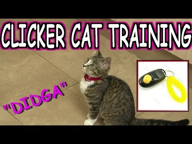 CLICKER TRAINING (CAT) TUTORIAL – BEGINNER
