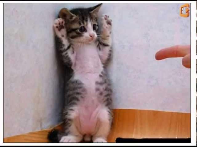 Cat training: Tips for cat training