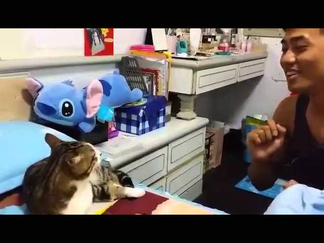 cat Voice Training!