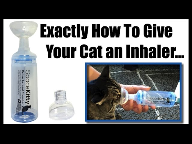 cat inhaler puffer training for cats with asthma spacekitty