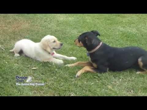 socialising a new puppy