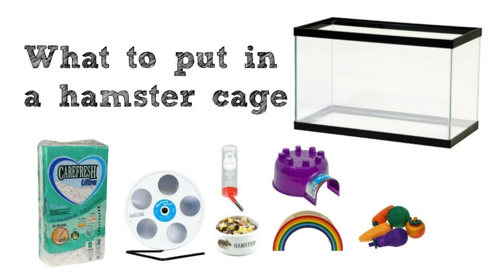 WHAT TO PUT IN YOUR HAMSTER CAGE