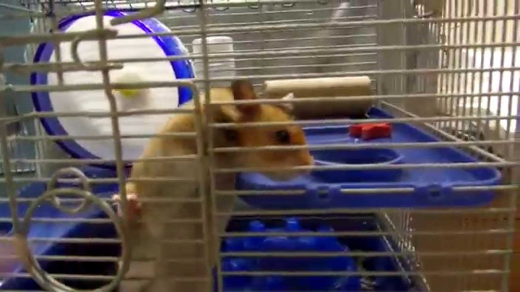 EVERYTHING you need to know about HAMSTERS!! Tips, Tricks, and Advice for Hamster owners