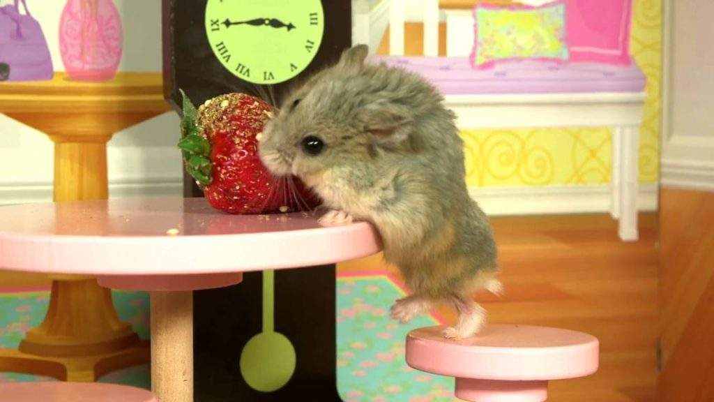 Tiny Dwarf Hamster in a Tiny Mansion