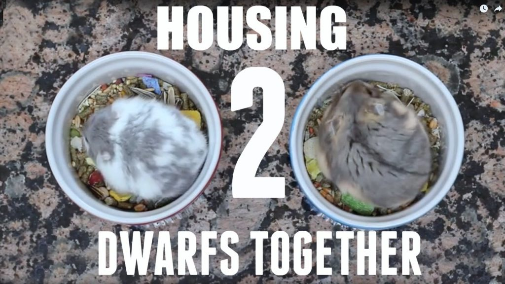 HOUSING 2 DWARFS TOGETHER
