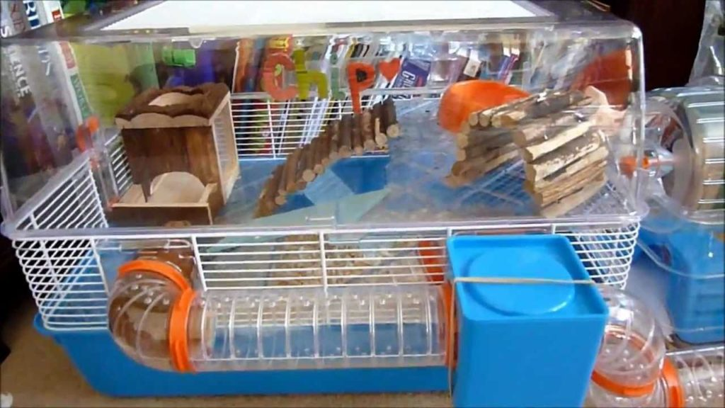 Hamster Care: Cage Tour