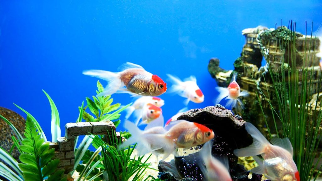 How to Set Up a Freshwater Fish Tank | Aquarium Care