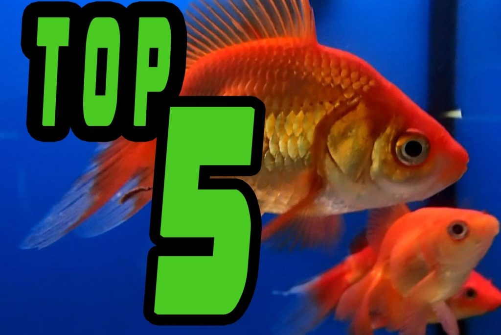TOP 5: Easy BEGINNER Fresh Water FISH