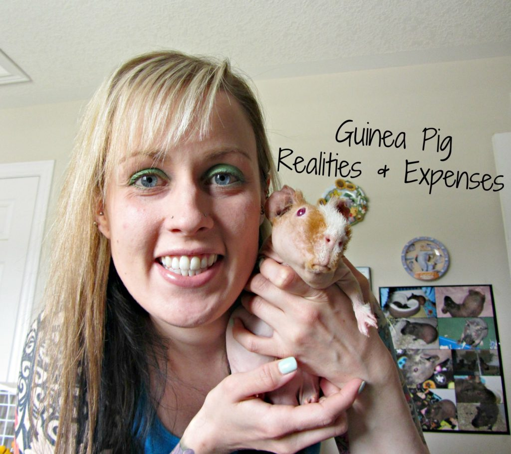 Guinea Pig Realities & Expenses