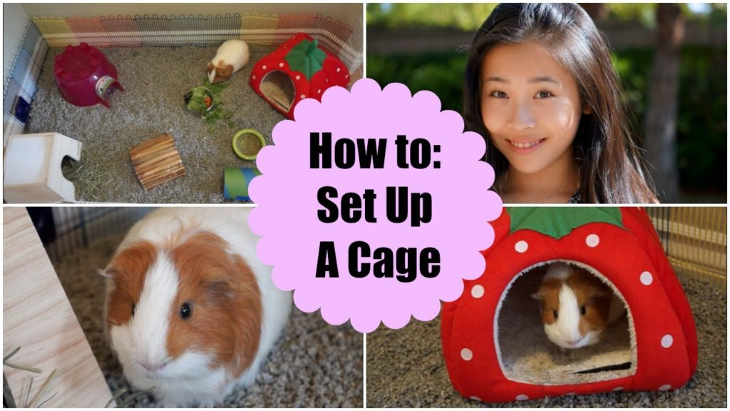 How to Set Up A Guinea Pig Cage | ItsMeMichele