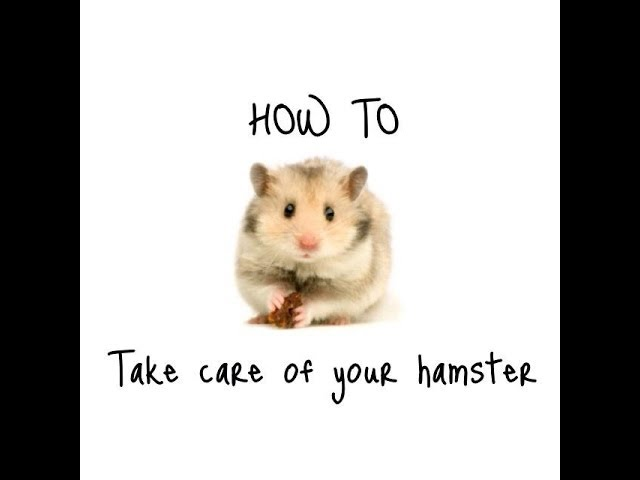 *HOW TO TAKE CARE OF A HAMSTER/ WHAT YOU NEED TO TAKE CARE OF A HAMSTER*