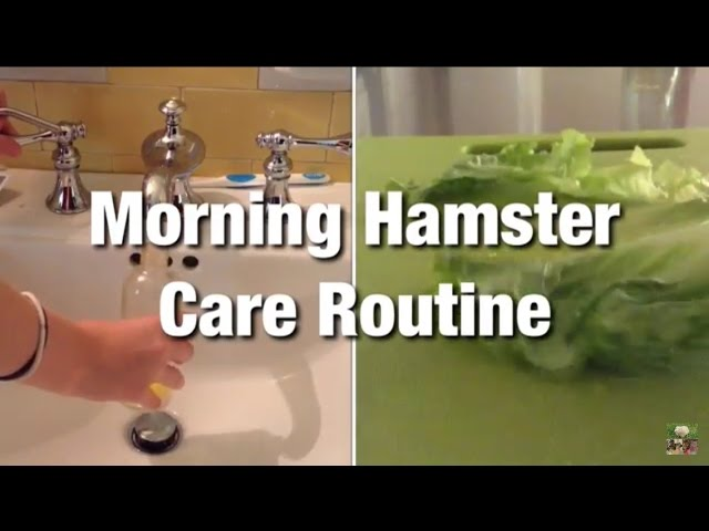 Morning Hamster Care Routine
