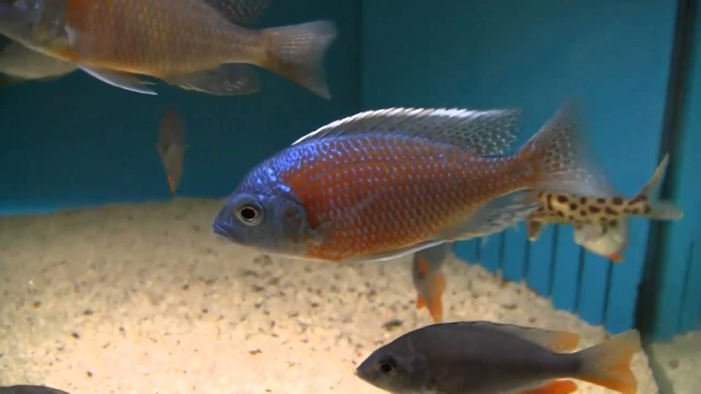 Keeping Tropical Freshwater Fish Successfully