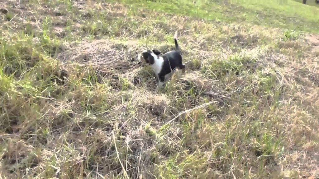Puppy training videos