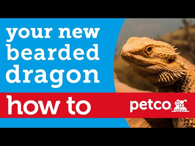 How to – Bearded Dragon and Reptile Care (Petco)