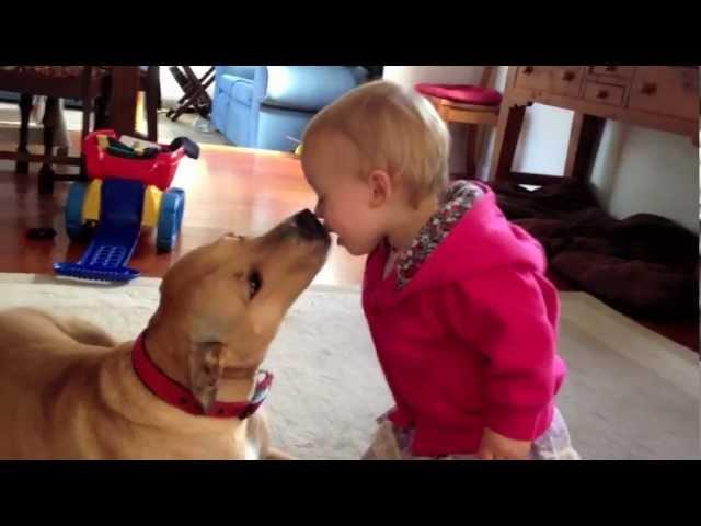 Best dog around children