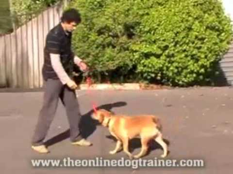 Doggy Dan's Dogs On The Online Dog Trainer 2