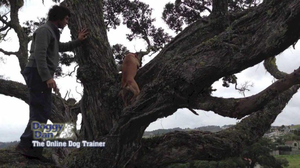 Dog climbing tree