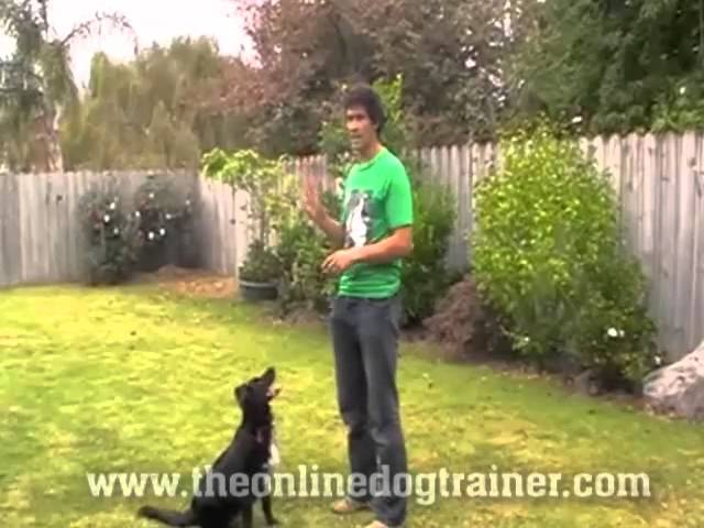 Meet The Dogs on Doggy Dan's Online Dog Trainer 1