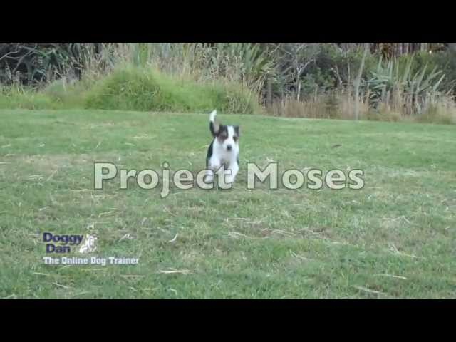 Puppy training videos – Project Moses